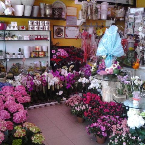 fiori-piante-negozi-01