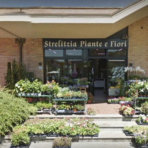 fiori-piante-negozi-02